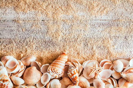 Border of assorted seashells including a cone, bivalves conch and a small starfish on sandy wooden boards with copyspace in a conceptual nautical background
