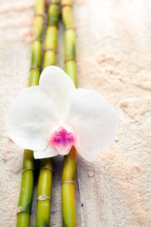 Beautiful fragile white orchid and bamboo on beach sand conceptual of wellness, alternative medicine and spa treatments photo