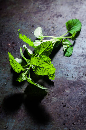 potherb: Sprig of fresh peppermint used as a potherb and flavoring in cooking lying on a dark grey textured slate surface with copyspace