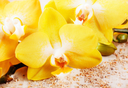 Background close up of beautiful yellow phalaenopsis orchids, a popular cultivated hothouse and houseplant symbolic of luxury, love and spa treatments Stock Photo