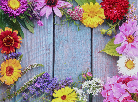 Colorful frame of fresh summer flowers arranged as a border on rustic blue wooden boards with copyspace for your text photo