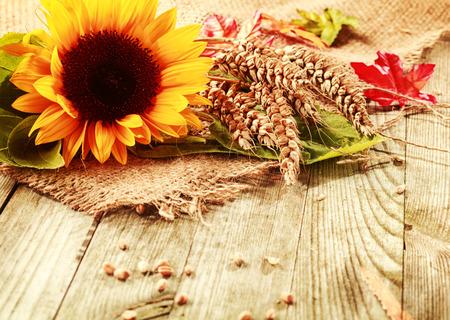 Latem lub jesienią tła z barwnym żółtym świeżego słonecznika i świeżo zebrane dojrzałe kłosy pszenicy na placu juty tkaniny na drewnianych desek z copyspace