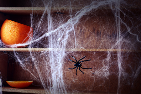 Spooky Halloween spider web background covering wooden shelves with a fresh pumpkin and large spider crawling across it photo