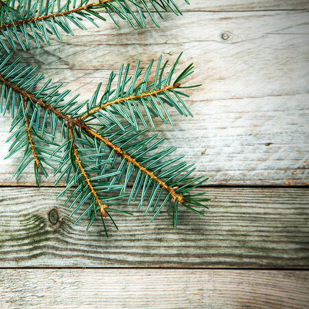 christamas: Pine branch extending from the top left corner on a rustic wooden board background with woodgrain texture and copyspace, square format