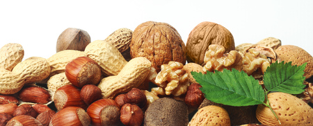 Assorted fresh nuts horizontal banner with whole almonds, hazelnuts, brazil nuts, peanuts and walnuts in their shells and shelled on white with two green leaves photo