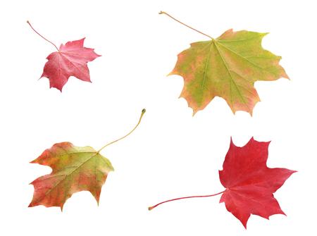 Pilze Auf Baum Lizenzfreie Fotos, Bilder Und Stock Fotografie. Image ...
