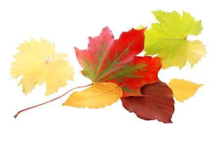 화이트 절연가 시즌의 다채로운 팔레트를 보여주는 노란색과 녹색 나뭇잎의 선택 사이 활기찬 붉은 가을 잎