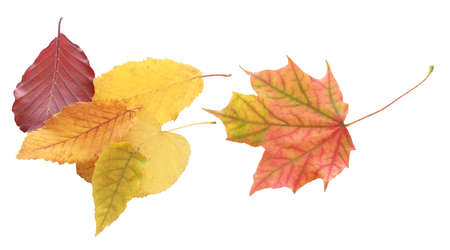 top angle: Still Life of Collection of Autumn Leaves on White Background