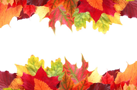 Double border of vibrant colorful autumn or fall leaves in shades of red, yellow, orange and green with central white copyspace for your greeting or Thanksgiving message