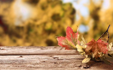 changing seasons: Twig with colorful withering autumn leaves depicting their life cycle with the changing seasons lying on a rustic wooden table in a fall garden, with copyspace