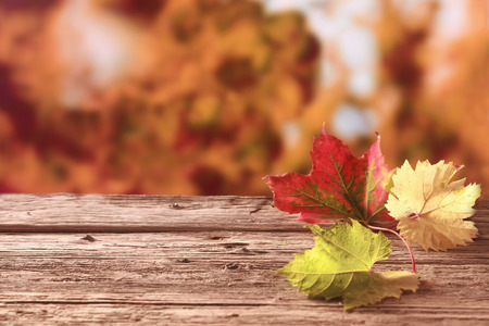 changing colors: Three autumn leaves in red, yellow and green showing the colorful palette of the fall season lying on an old weathered wooden table against a background of coppery autumn foliage, with copyspace