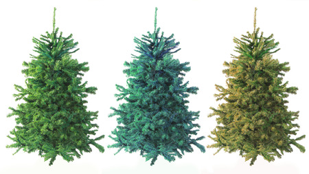 pine three: Three Evergreen Trees of Varying Green Color on White Background