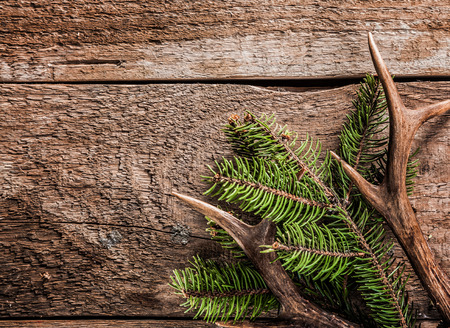 deer hunting: High Angle View of Evergreen Branch with Deer Antler Against Rustic Wooden Background with Copy Space
