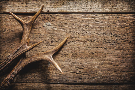 High Angle View of Deer Antlers Against Rustic Wooden Background with Copy Space Archivio Fotografico
