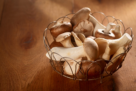 assorted: Fresh autumn harvest of King Oyster mushrooms, Pleurotus eryngii, collected in a rustic wire basket and displayed over a soft brown background with copyspace to the side Stock Photo