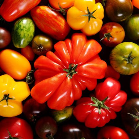 assortment: Square food and healthy diet background of assorted fresh ripe tomatoes of differing cultivars showing the range of shapes and sizes, close up overhead view Stock Photo