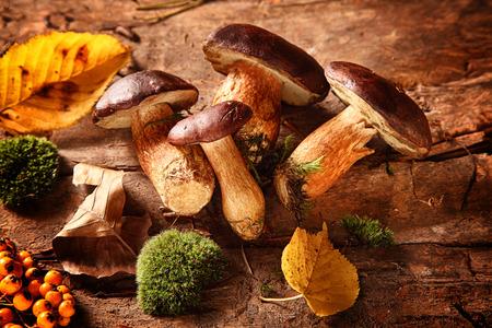 boletus입니다 버섯과 신선한 숲 버섯의 건강한 가을 수확 및 이끼 장미 엉덩이와 화려한 가을 제철 요리 소박한 나무 배경에 나뭇잎