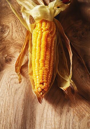 zea mays: Farm fresh seasonal autumn grilled sweet corn on the cob viewed overhead centered on a wooden background in vertical orientation
