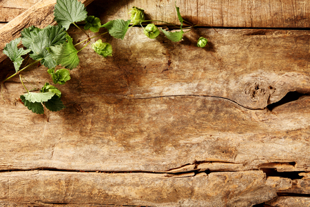 weathered: Rustic weathered wood background with greenery arranged in the top left corner and copyspace, overhead view