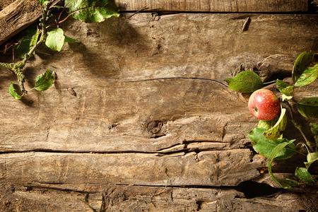 madera rústica: Crujiente de manzana fresca de otoño rojas sobre un fondo de madera rústica degradado y textura con hojas que enmarca una frontera con copyspace centro