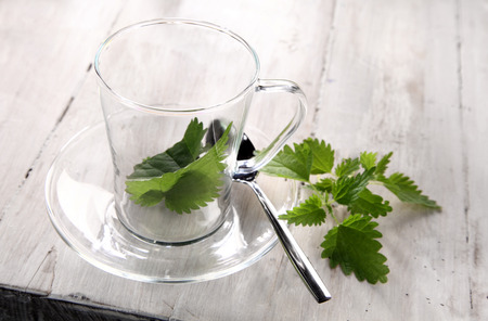 stinging nettle: Preparing fresh nettle tea with the green leaves of the stinging nettle placed ready in a clear glass cup and saucer ready for the addition of boiling water, high angle view