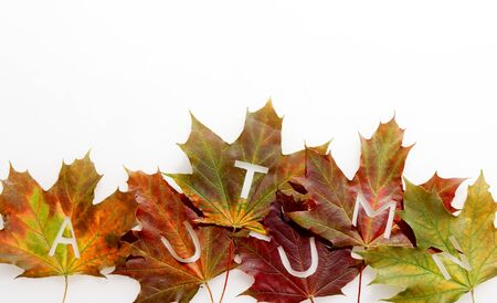 fall leaf: Colorful fall or autumn leaf border with a row of multicolored leaves with the letters - Autumn - arranged over a white background with copyspace to mark the changing of the seasons