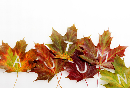 seasons changing: Autumn leaves decorative border with text - Autumn - spread across individual colorful leaves depicting the changing seasons arranged in a zigzag line isolated on white with copyspace