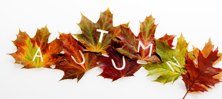 changing seasons: Colorful arrangement of fall leaves in an Autumn concept with the letters - Autumn - spread across them depicting the life cycle of nature and changing seasons, isolated on white Stock Photo