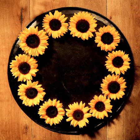 sun down: Colorful yellow round sunflower frame of a ring of fresh summer sunflowers arranged on a tray with central copyspace placed over a wood background, square format overhead view Stock Photo