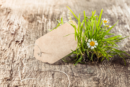 tuft: Spring or happy easter greeting card with tuft of meadow and copy space on brown wood Stock Photo
