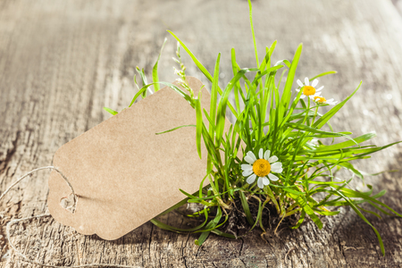 Beautiful Spring sign or tag with grass. Daisies and tuft of grass with an empty sign for your conceptual work like cards or advertisement.
