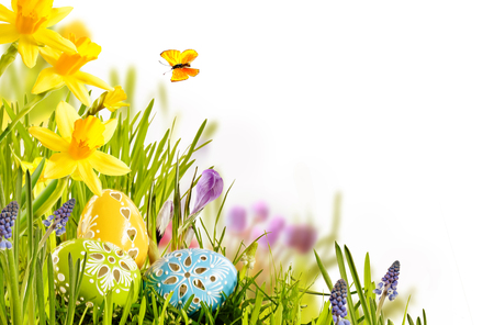 Fresh spring Easter card design with foil wrapped chocolate eggs nestling in green grass with colorful yellow daffodils over white with copy space for your seasonal greeting Stok Fotoğraf