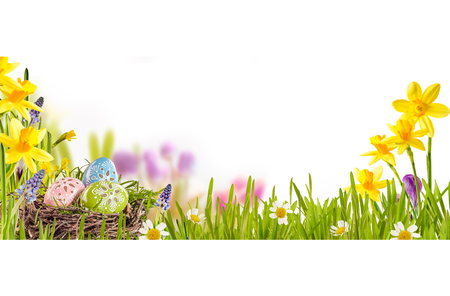 christian festival: Easter background with colorful patterned Easter eggs in a bird nest amid green grass and spring flowers over white with copyspace, wide angle view