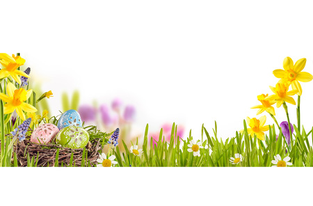Traditional decorated Easter Eggs in a bird nest nestling in fresh green grass in a colorful spring meadow with daffodils and daisies, over white with copy space, panoramic view