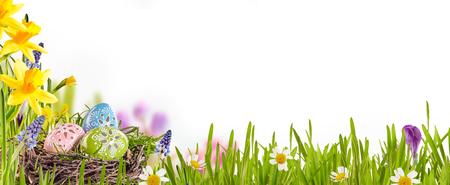 Украшенные пасхальные яйца извивается в птиц гнездятся среди свежей зеленой травы, желтые нарциссы и ромашки в весенний луг, формирование границы над белым с копией пространства Фото со стока