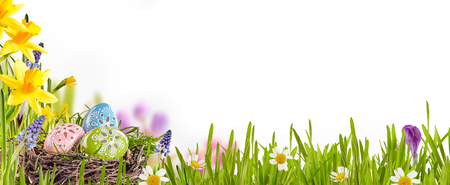 spring: Los huevos de Pascua decorados enclavado en un nido de pájaros entre la hierba verde fresca, narcisos amarillos y margaritas en un prado de primavera formando una frontera sobre blanco con el espacio de la copia