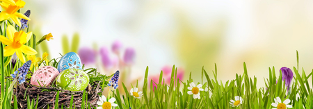 Spring banner with Easter Eggs in a bird nest nestling in fresh green grass with yellow daffodils and daisies against a blurred outdoor background with copy space