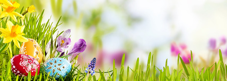 Horizontal Easter banner with eggs in a fresh green spring meadow nestling in the grass with colorful yellow daffodils, outdoor, blur background with copyspace