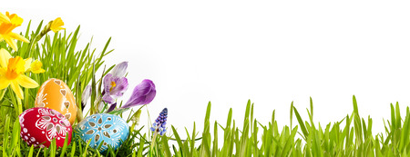 Colorful horizontal Easter egg banner with spring flowers in a green grassy meadow isolated over white with copy space for your holiday greeting