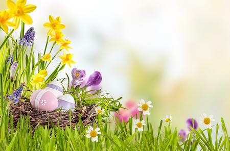 Свежий весенний фон с пасхальными яйцами птенца в гнезде птиц среди ярких цветов и зеленой травы с Copyspace выше для праздничного праздничного приветствия