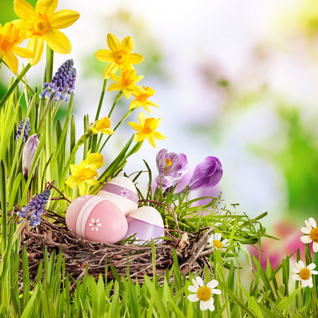 Colorful Easter greeting card with a cluster of decorated eggs in a nest amidst fresh green grass and spring flowers with copy space in square format Standard-Bild