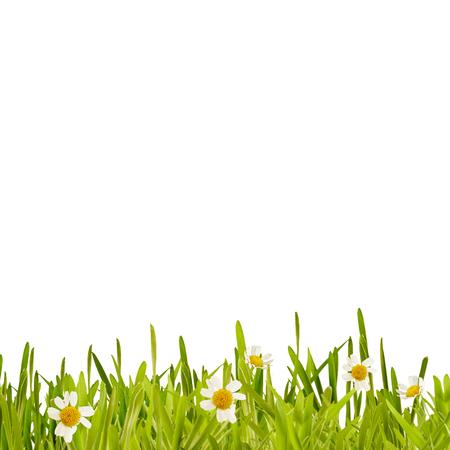 Verse groene lente gras en daisy grens geïsoleerd op wit met kopie ruimte in vierkant formaat voor gebruik als een sjabloon