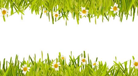 パノラマ形式で中央の白いコピー スペースに繊細な白いヒナギクで新鮮な新しい緑の草の二重枠線の春