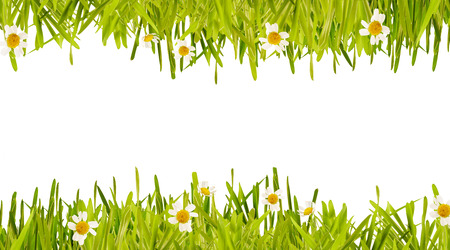Double spring border of fresh new green grass with delicate white daisies with central white copy space between in a panoramic format
