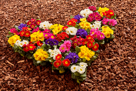 bark mulch: Yellow, white, red, purple and pink ornamental flowerpots formed as colorful valentine heart over wood chip background