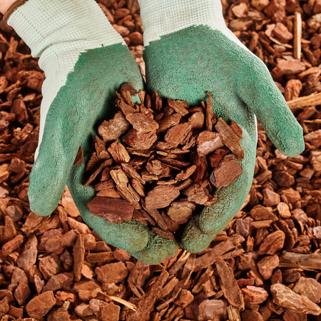 Close up on pair of green rubber coated cloth gloved hands full of pine bark mulch wood chips