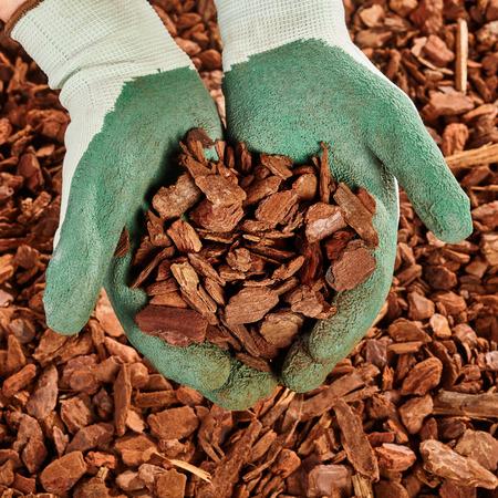 Close-up op paar groene rubber beklede doek gehandschoende handen vol van denneschors mulch houtsnippers