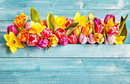 コピー スペース春花の境界線。カラフルな様々 な春の花チューリップとして素朴なシアンの木製の背景に 写真素材 - 53497615