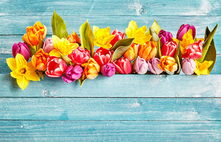 illustrative material: Spring flowers border with copy space. Colorful various spring flowers as tulips on rustic cyan wooden background Stock Photo