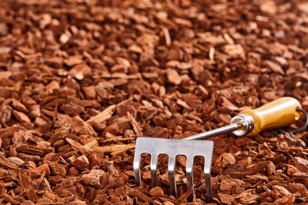 wood chip: Single small wooden and metal hand rake over brown wood chip mulch pile with copy space outdoors Stock Photo